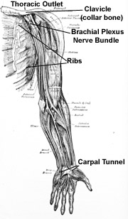 Massage therapists providing injury treatments for thoracic outlet syndrome & nerve pain in your arms & hands.  Pain from impingement in the neck.  Offices in Boulder, Broomfield, Louisville, Westminster, Gunbarrel, Denver.