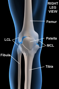 Sports massage therapy and injury rehab for knee joint, patella tendon or cap pain and injuries caused to the knee for athletes:  MCL, LCL, ACL, PCL. Therapists in Boulder, Broomfield, Louisville, Westminster, Gunbarrel, Denver.