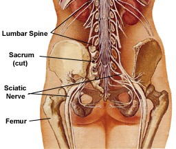 Massage therapy and injury rehab for sciatica or sciatic nerve pain.