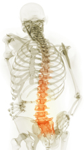 Massage therapy for scoliosis & scolitic curves. Massage therapists providing myofascial release, active release, trigger point therapy for herniated, disc, bulging disc.  Boulder, Broomfield, Louisville, Westminster, Gunbarrel, Denver therapists.